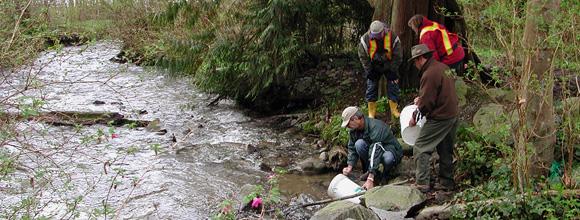 Mossom Creek :: Chum Fry Release